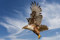 hawk 2